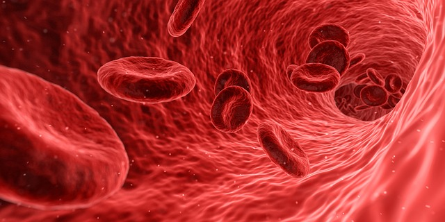krvinky.jpg
